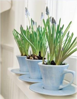 pots cups plants