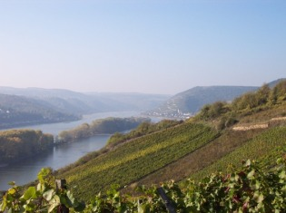 rhine-vineyards